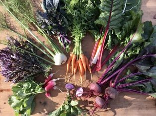 Lugar da Terra – legumes orgânicos