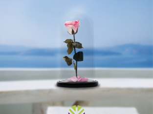 Imperio da flor