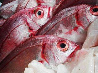 Mar da Sónia – Mercado