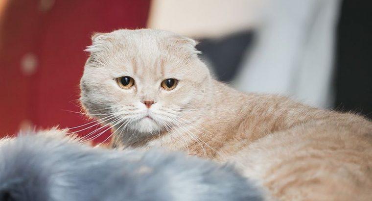 Molly&Jack – tudo para o seu PET