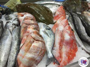 O Peixe do 31