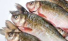 Peixe Vivo