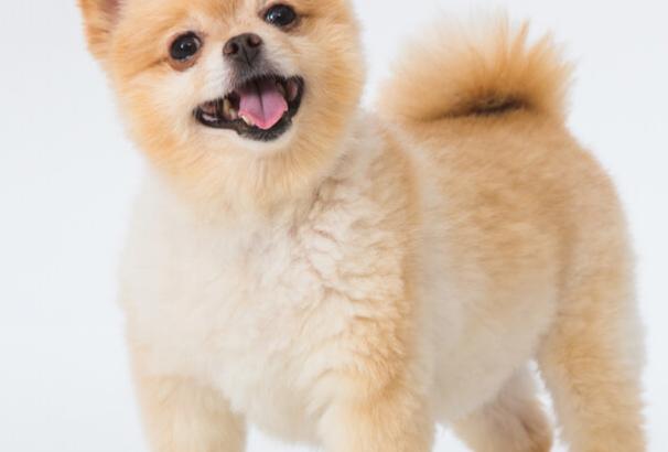 Tibi pets for life