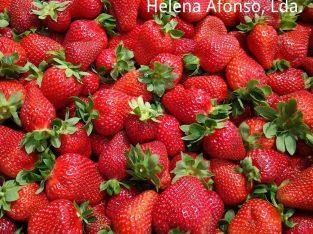 Helena Afonso Unipessoal Lda